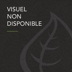 Image de Maison Meneau - Thé Vert BIO à la Pêche 25 cl